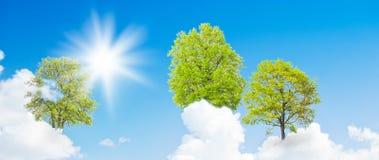 Bäume, die aus den Wolken heraus wachsen Stockfotos