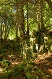 Bäume, die aus einer Felsenwand in Door County heraus, WI wachsen lizenzfreie stockfotos