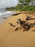 Bäume, die das Ufer umarmen Stockfotografie