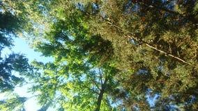 Bäume, die den Himmel verstecken stockfotografie