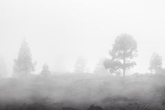Bäume, die in der nebeligen Landschaft verschwinden Lizenzfreie Stockfotografie