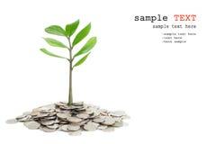 Bäume, die in einem Stapel des Geldes wachsen. Stockfotografie