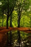 Bäume, die in einem Wasserbecken sich reflektieren Stockfotos