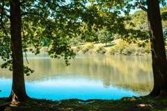 Bäume, die einen See an einem sonnigen Sommertag am Blautanne-Park gestalten lizenzfreies stockfoto