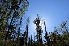 Bäume, die für den Himmel erreichen Lizenzfreie Stockfotos