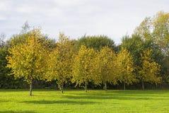Bäume, die Farbe im Herbst ändern Lizenzfreie Stockbilder