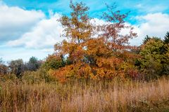 Bäume, die Farben auf einem Naturweg in Akron Ohio ändern Lizenzfreie Stockfotografie