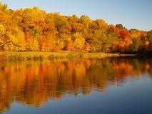 Bäume, die Farben in einem Park ändern Stockbilder