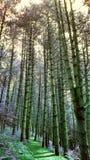 Bäume, die hoch stehen Lizenzfreies Stockbild