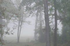 Bäume, die im Nebel stehen Stockfotos