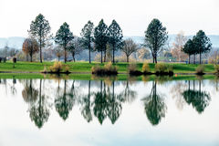 Bäume, die im See sich reflektieren Stockfotografie