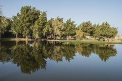 Bäume, die im Teich an einem ländlichen Park sich reflektieren Lizenzfreies Stockbild