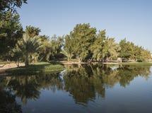 Bäume, die im Teich an einem ländlichen Park sich reflektieren Lizenzfreie Stockfotografie