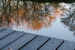 Bäume, die im Wasser miroring sind lizenzfreies stockfoto