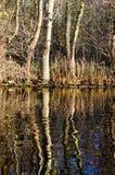 Bäume, die im Wasser miroring sind stockfotos