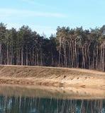 Bäume, die im Wasser sich reflektieren stockfoto