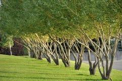Bäume, die im Wind durchbrennen Stockfotografie