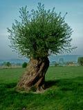 Bäume, die intersting abstrakte Formen bilden Stockfotografie