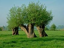 Bäume, die intersting abstrakte Formen bilden Stockbilder