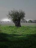Bäume, die intersting abstrakte Formen bilden Lizenzfreie Stockbilder