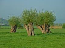 Bäume, die intersting abstrakte Formen bilden Stockbild