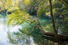 Bäume, die nah über der Oberfläche des Sees am plitvice hängen stockbilder