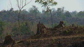 Bäume, die nahe dem Wald geschnitten werden stock video