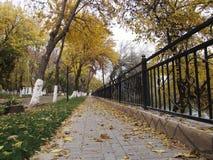 Bäume, die noch mit etwas goldenen Farben grün bleiben Lizenzfreie Stockfotos