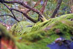 Bäume, die noch mit etwas goldenen Farben grün bleiben lizenzfreies stockbild