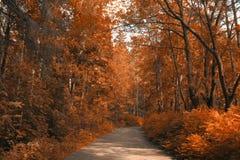 Bäume, die noch mit etwas goldenen Farben grün bleiben Stockfotos