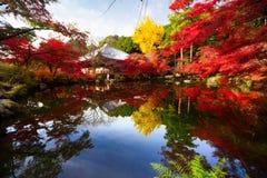 Bäume, die noch mit etwas goldenen Farben grün bleiben Stockbild