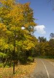 Bäume, die noch mit etwas goldenen Farben grün bleiben Lizenzfreie Stockfotografie