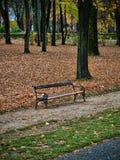 Bäume, die noch mit etwas goldenen Farben grün bleiben stockfoto