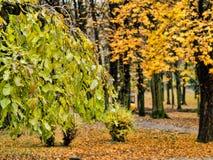 Bäume, die noch mit etwas goldenen Farben grün bleiben lizenzfreie stockbilder