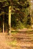 Bäume, die noch mit etwas goldenen Farben grün bleiben Alter Tannenbaum und -Holzbank Lizenzfreie Stockbilder