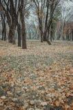 Bäume, die noch mit etwas goldenen Farben grün bleiben Gefallene Gelbblätter lizenzfreie stockfotografie