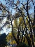 Bäume, die noch mit etwas goldenen Farben grün bleiben Herbstliche Bäume und Blätter in den Sonnenstrahlen stockbild