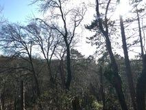 Bäume, die oben in die Sonne steigen stockfoto