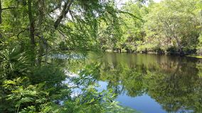 Bäume, die Santa Fe River übersehen Lizenzfreies Stockfoto