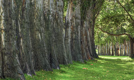 Bäume, die Schatten am Kolumbien-Hügel-Nationalpark bereitstellen Stockbild