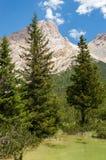 Bäume, die vom See steigen Stockbilder