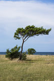 Bäume durch das Meer Stockfoto