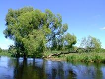 Bäume durch den Fluss lizenzfreies stockbild