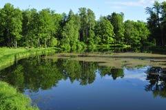 Bäume durch den Fluss Lizenzfreie Stockfotos