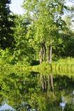 Bäume durch den Fluss Stockfoto