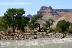 Bäume durch den Green River, Utah Stockfotografie