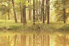Bäume durch den See Stockbild