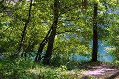 Bäume durch den See lizenzfreie stockfotografie