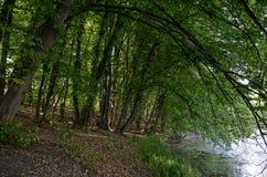 Bäume durch den Teich Stockfotos