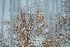 Bäume durch die Eiszapfen Lizenzfreie Stockbilder